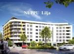 105_nuppy_LILIA1